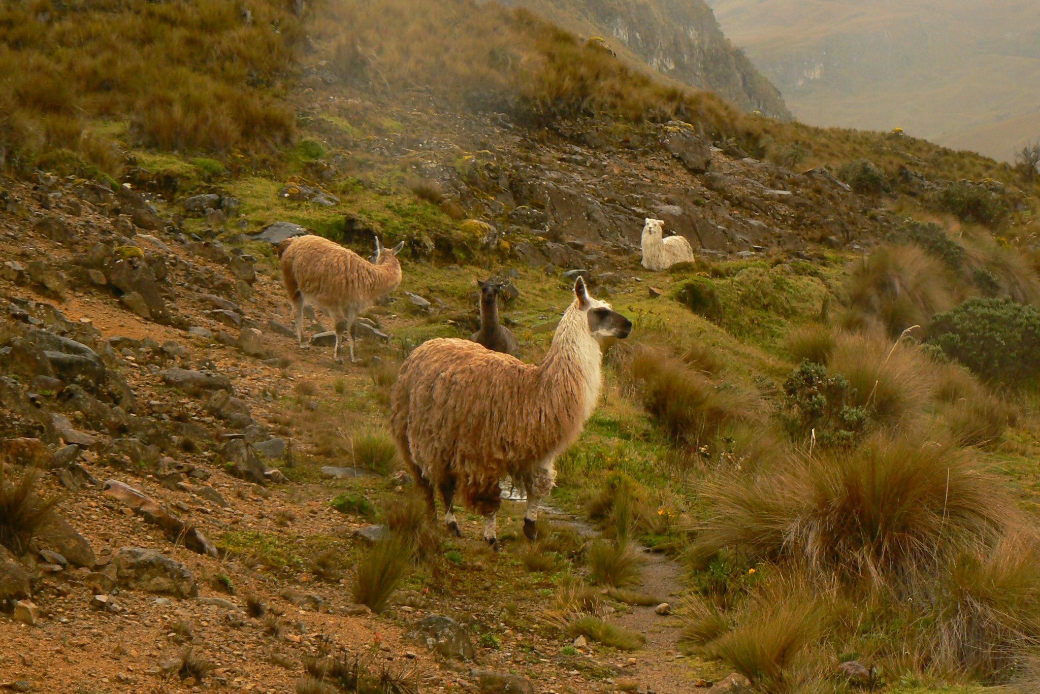 Hudba prastarého lesa a prezentácia cestopisných fotiek z Ekvádoru