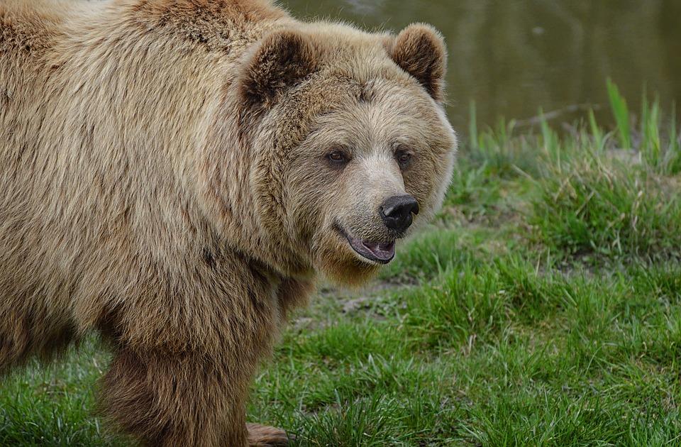 Bojnice: Neďaleko Bojníc napadol muža medveď