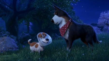 Tajný život maznáčikov 2 (The Secret Life of Pets 2) 1