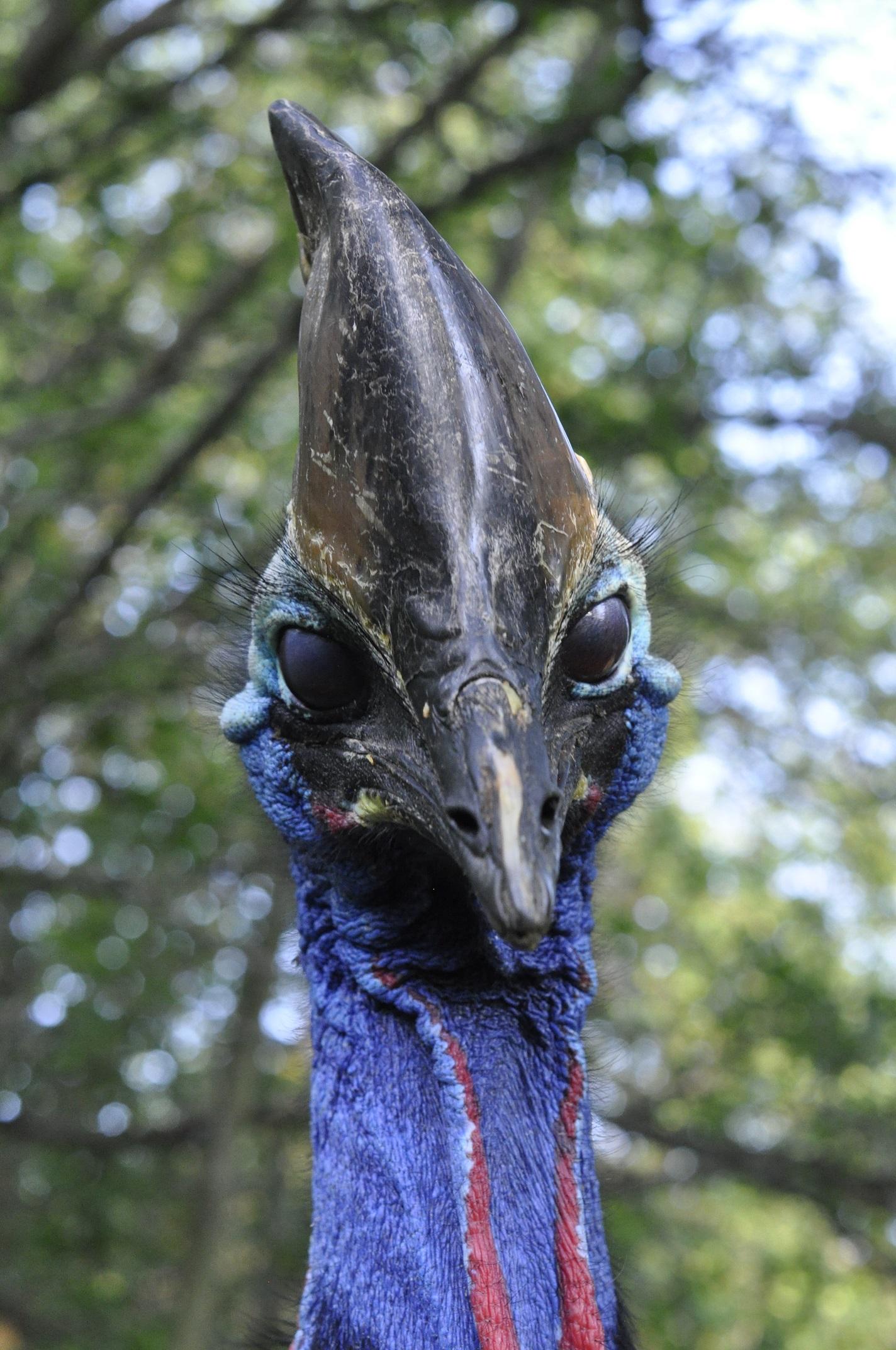 Národná zoo Bojnice chová najnebezpečnejšieho vtáka na svete !