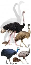 Národná zoo Bojnice chová najnebezpečnejšieho vtáka na svete ! 0