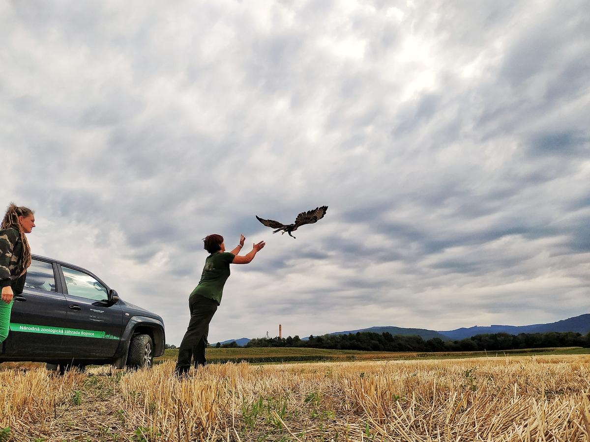 Foto: Zoo Bojnice môže kontrolovať rehabilitáciu vtákov, ktoré vypustili