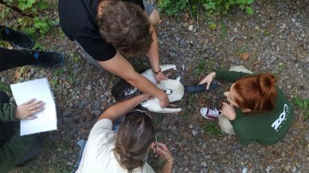Foto: Zoo Bojnice môže kontrolovať rehabilitáciu vtákov, ktoré vypustili 0