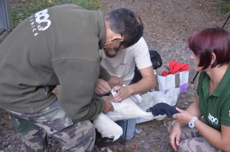 Foto: Zoo Bojnice môže kontrolovať rehabilitáciu vtákov, ktoré vypustili 1