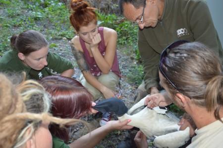 Foto: Zoo Bojnice môže kontrolovať rehabilitáciu vtákov, ktoré vypustili 2