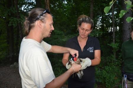 Foto: Zoo Bojnice môže kontrolovať rehabilitáciu vtákov, ktoré vypustili 3