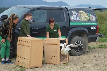 Foto: Zoo Bojnice môže kontrolovať rehabilitáciu vtákov, ktoré vypustili 4