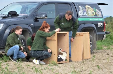Foto: Zoo Bojnice môže kontrolovať rehabilitáciu vtákov, ktoré vypustili 5
