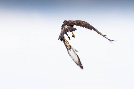 Foto: Zoo Bojnice môže kontrolovať rehabilitáciu vtákov, ktoré vypustili 8