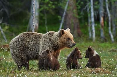 Pozor: Medveď v okolí Lesoparku Prievidza