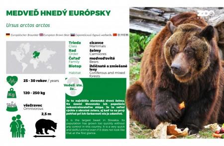Pozor: Medveď v okolí Lesoparku Prievidza 0