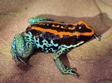 Foto: Národná zoo Bojnice chová najjedovatejšie zvieratá sveta, merajú iba pár centimetrov 4