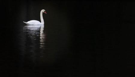 Foto: Bojnické zámocké jazero prišlo v krátkej dobe o všetky svoje labute hrbozobé 0