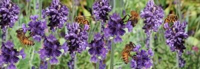 V lesnej škôlke v Bôriku pribudne komunitná včelnica