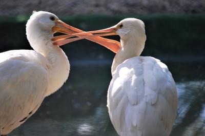 Vyjadrenie Národnej zoo Bojnice k aktuálnej situácií a vtáčej chrípke