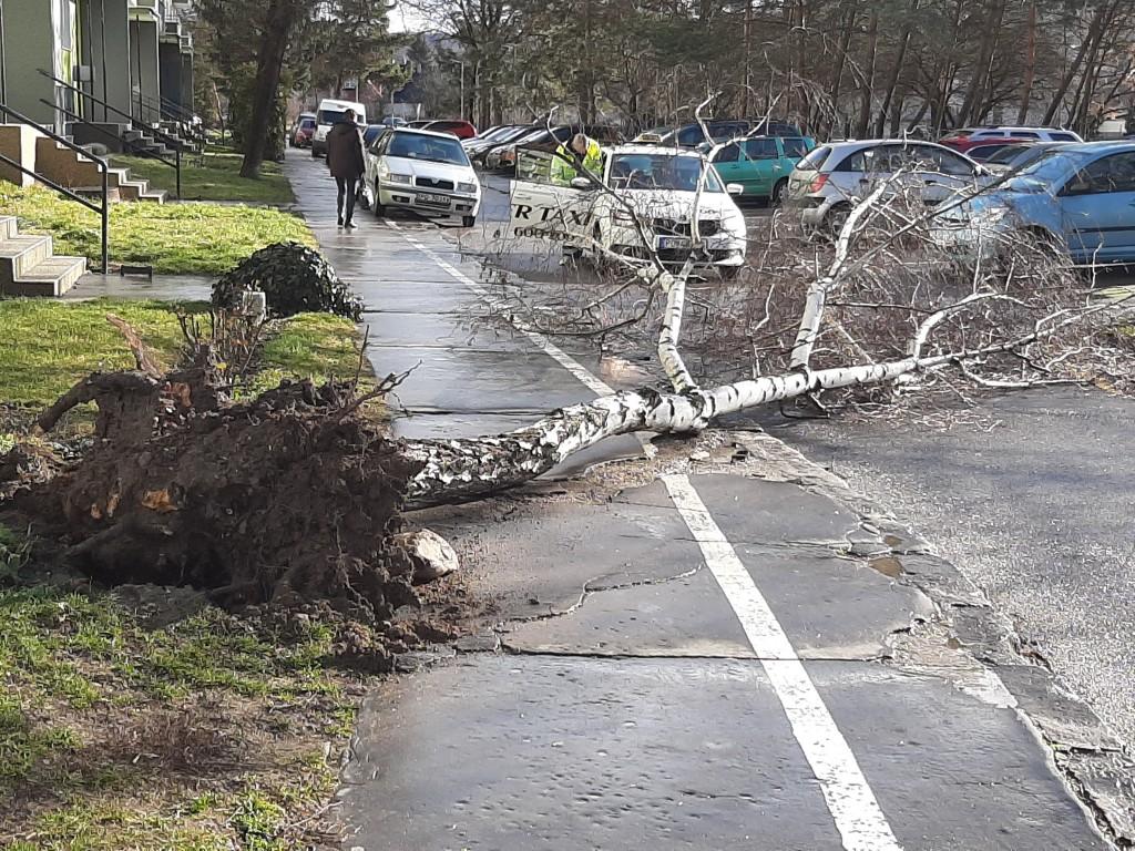 Pozor na silný vietor v Prievidzi a okolí. Vyvracal stromy a ničí majetok