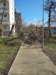 Pozor na silný vietor v Prievidzi a okolí. Vyvracal stromy a ničí majetok 1