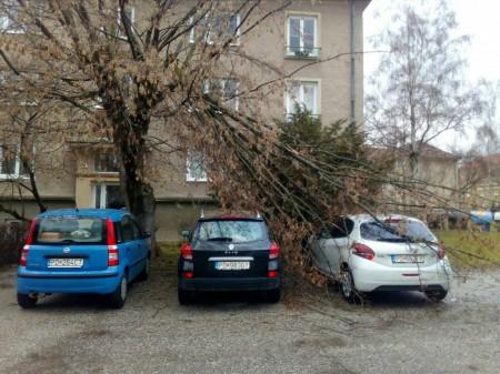 Pozor na silný vietor v Prievidzi a okolí. Vyvracal stromy a ničí majetok 3