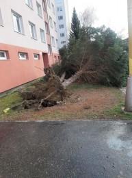 Pozor na silný vietor v Prievidzi a okolí. Vyvracal stromy a ničí majetok 4