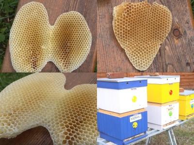 Video: Mestské včely v Prievidzi vytvorili srdce a anjelske krídla