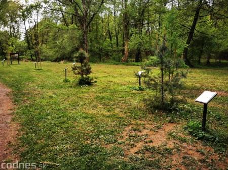 Foto: Mestský park v Prievidzi sa rozvíja vďaka novým projektom 4