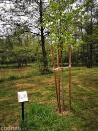 Foto: Mestský park v Prievidzi sa rozvíja vďaka novým projektom 19
