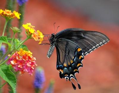 Motýlia zahráda v Zoo Bojnice je už otvorená