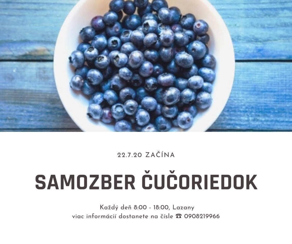 Ukončené - Samozber čučoriedok - čučoriedky Lazany - Prievidza