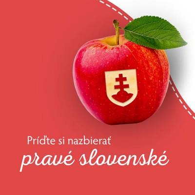 Samozber jabĺk Ostratice 2020