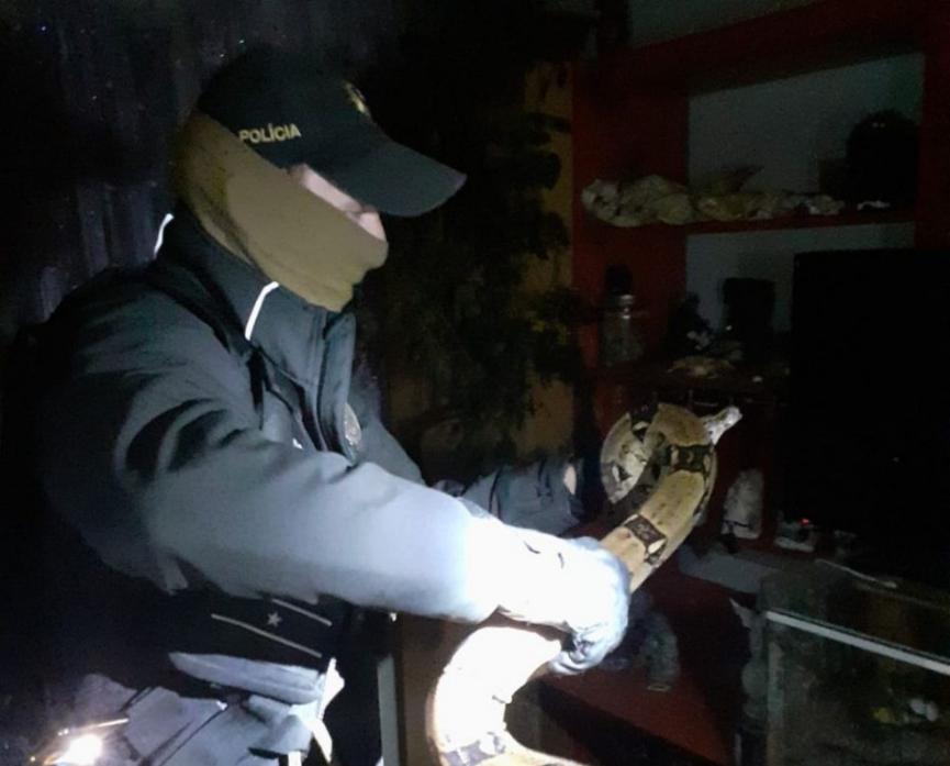 V PRIEVIDZI UŠIEL VEĽHAD: Vystrašenú vnučku majiteľa ochránila polícia