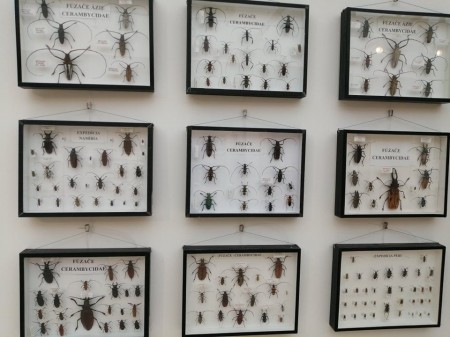 Tropický hmyz 6