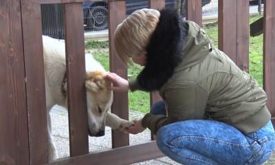 Video: Ukradnutého psa z Malinovej našli po dvoch mesiacoch. Pomohli sociálne siete.