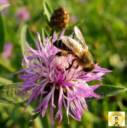 ONLINE Žijeme zdravo: Včelia alchýmia 0