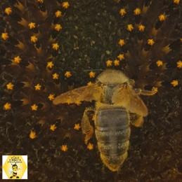 ONLINE Žijeme zdravo: Včelia alchýmia 1