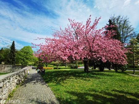 Foto: Rozkvitnuté Bojnice a okolie Bojnického zámku 9