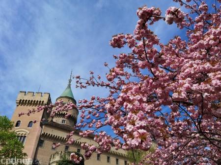 Foto: Rozkvitnuté Bojnice a okolie Bojnického zámku 12