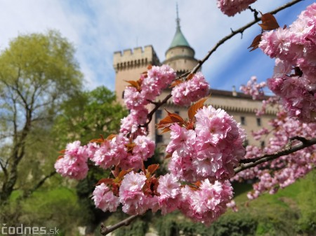 Foto: Rozkvitnuté Bojnice a okolie Bojnického zámku 15