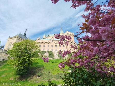 Foto: Rozkvitnuté Bojnice a okolie Bojnického zámku 17