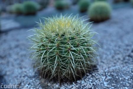 Foto a video: V Bojniciach otvorili novú unikátnu atrakciu Botany Park Bojnice (kaktusárium) 8