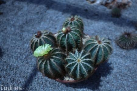 Foto a video: V Bojniciach otvorili novú unikátnu atrakciu Botany Park Bojnice (kaktusárium) 9