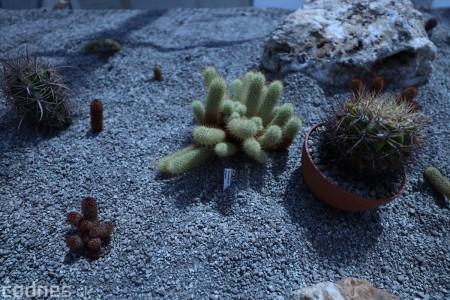 Foto a video: V Bojniciach otvorili novú unikátnu atrakciu Botany Park Bojnice (kaktusárium) 14