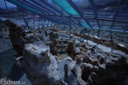 Foto a video: V Bojniciach otvorili novú unikátnu atrakciu Botany Park Bojnice (kaktusárium) 25