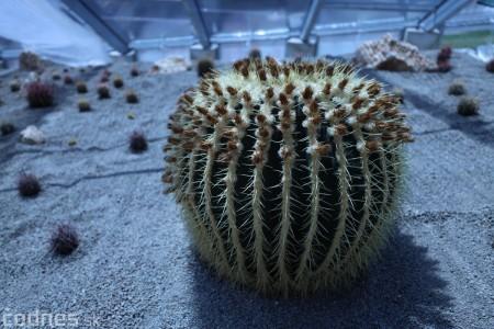 Foto a video: V Bojniciach otvorili novú unikátnu atrakciu Botany Park Bojnice (kaktusárium) 30