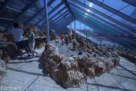 Foto a video: V Bojniciach otvorili novú unikátnu atrakciu Botany Park Bojnice (kaktusárium) 39