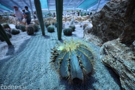 Foto a video: V Bojniciach otvorili novú unikátnu atrakciu Botany Park Bojnice (kaktusárium) 53
