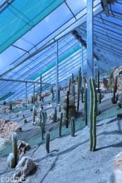 Foto a video: V Bojniciach otvorili novú unikátnu atrakciu Botany Park Bojnice (kaktusárium) 64