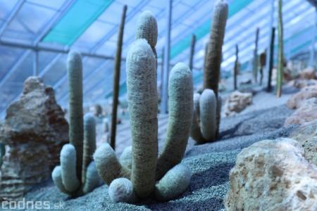 Foto a video: V Bojniciach otvorili novú unikátnu atrakciu Botany Park Bojnice (kaktusárium) 65