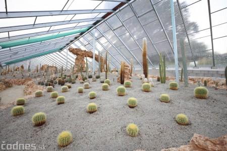 Foto a video: V Bojniciach otvorili novú unikátnu atrakciu Botany Park Bojnice (kaktusárium) 73