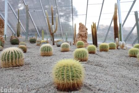 Foto a video: V Bojniciach otvorili novú unikátnu atrakciu Botany Park Bojnice (kaktusárium) 61