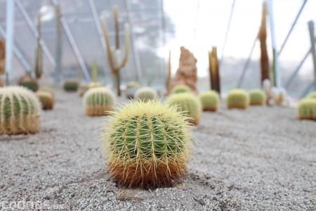 Foto a video: V Bojniciach otvorili novú unikátnu atrakciu Botany Park Bojnice (kaktusárium) 51